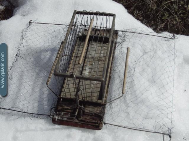 Зимняя ловля птиц на путанку